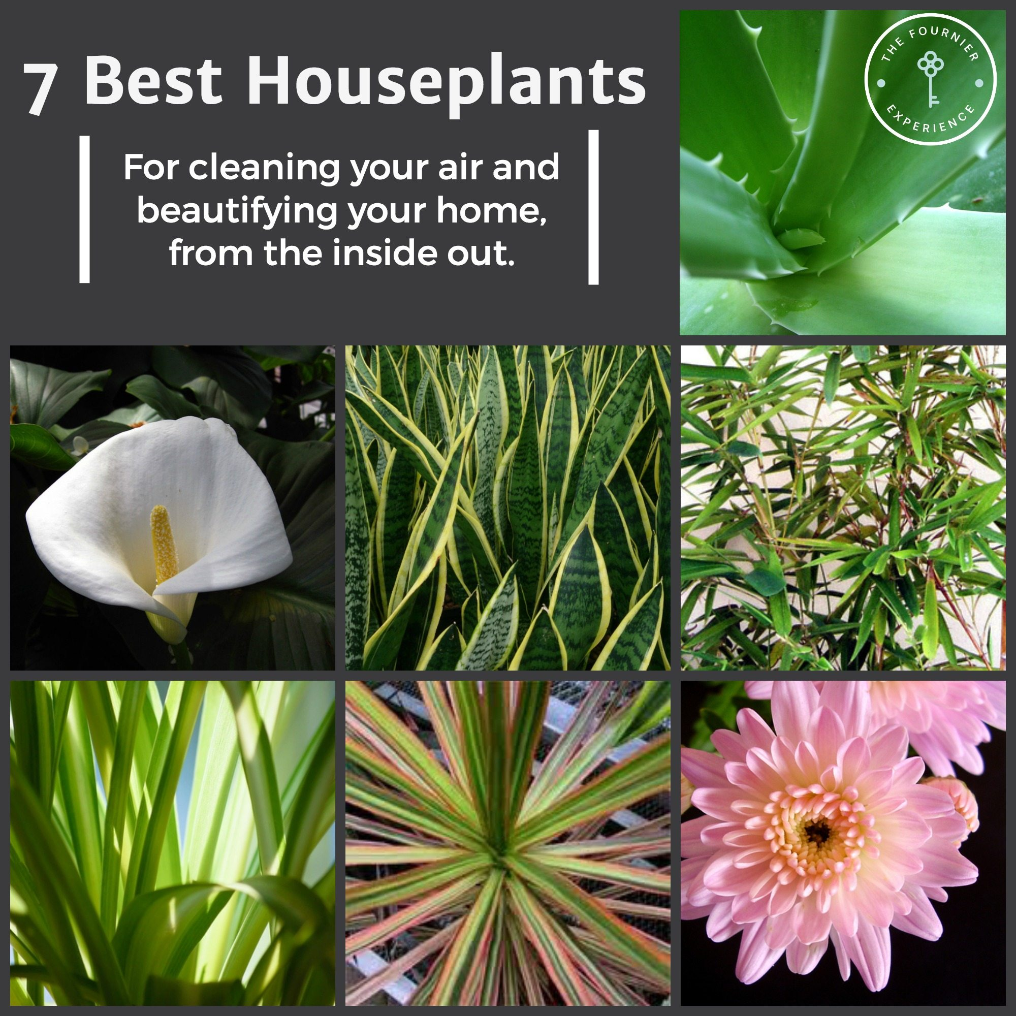 Best Houseplants | The Fournier Experience